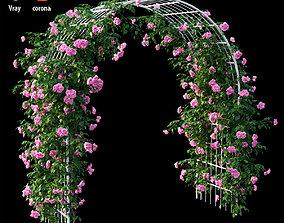 Rose plant set 44 leaf 3D model