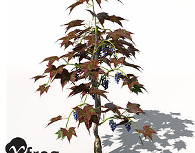 XfrogPlants Grape Vine 3D