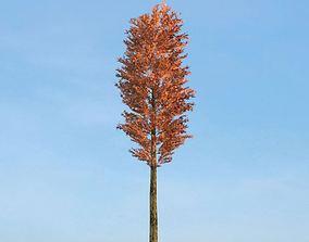 3D Tall Red Tree