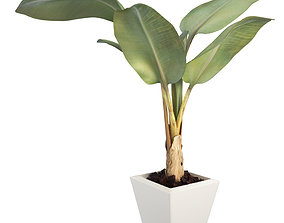 3D model Banana tree pot