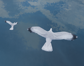 Low Poly Seagull Flock 3D model