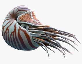 3D model Nautilus belauensis Static