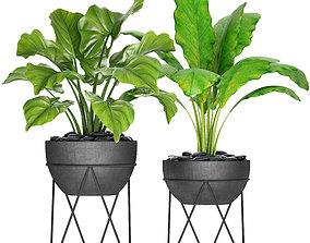 Plants collection pot 3D