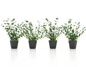 3D Mint Plant Pot