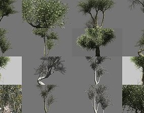 Olive Tree Collection 3D