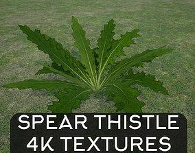 3D asset Thorny Spear Thistle Plant Bush 4K
