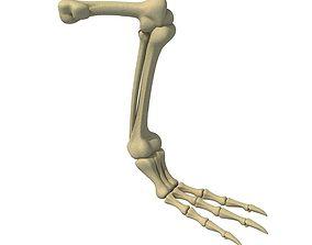 Pigeon Leg Skeleton 3D model
