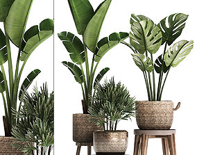 3D model Exotic plants set 457