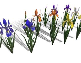 3D asset Flower Iris