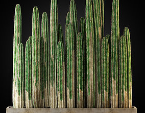 Plants collection 266 3D model