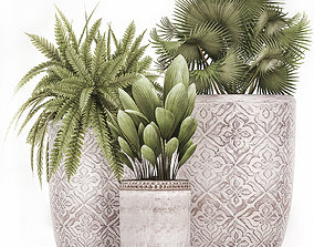 Decorative plants in flower pots for the interior 477 3D