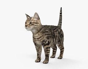 3D model Cat HD
