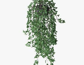 3D Ivy in pot 11