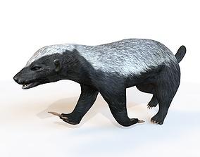 3D model Honey Badger Rigged
