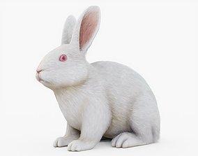 Rabbit with Fur 3D asset