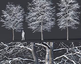 3D Tilia europaea Nr 6 H7-9m Three winter tree set