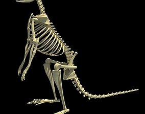 3D Kangaroo Skeleton