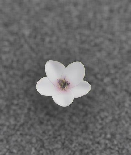 011_flower_white_1-3d-model.jpg