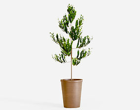 3D asset Small tree with pot