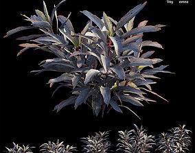 Cordyline Fruticosa plant set 03 3D model