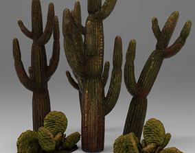 3D asset Cactus
