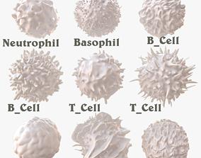 Lymphocytes 3D