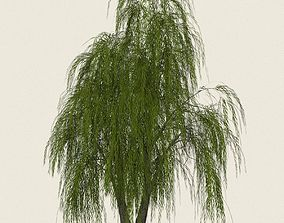 Game Ready Willow Tree 01 3D asset