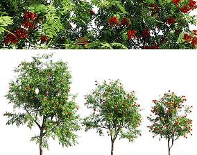 Rowanberries 3D model