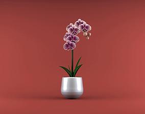 vase Orchid flower 3D model