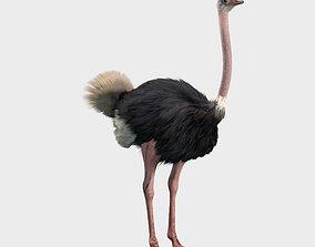 3D Ostrich