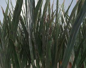 3D model ULTRA REALISTIC GRASS FOLIAGE