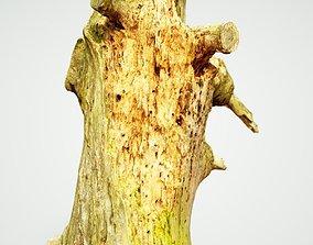 3D asset Arrow Shaped Tree Stump