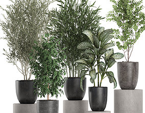 Decorative plants in a black flowerpots 648 3D model