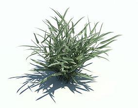 3D model Phalaris Arundinacea Plant