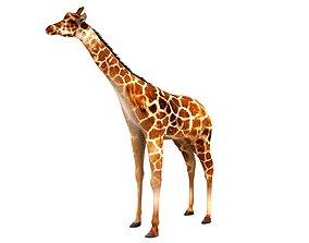 3D model Giraffe mammal 3d
