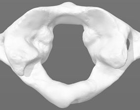 C1 first cervical vertebra - male 3D model