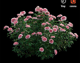 bush Rose plant set 27 3D model