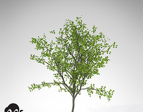 3D model XfrogPlants European Buckthorn