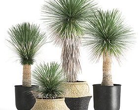Yucca rostrata in a flowerpot for the interior 3D model