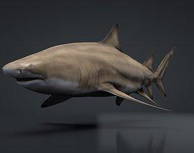 Lemon Shark 3D asset