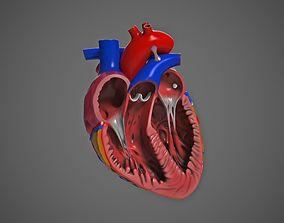 Human Heart pump 3D model