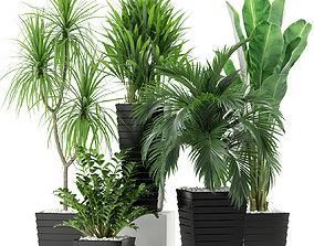 Plants collection 371 3D