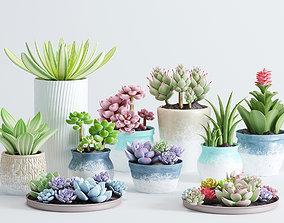 Succulent pot plants 3D