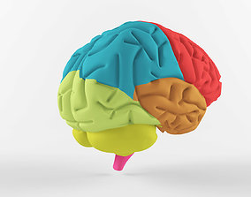 3D The human brain