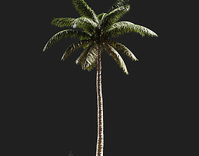 3D model Cocos nucifera Coconut palm-04