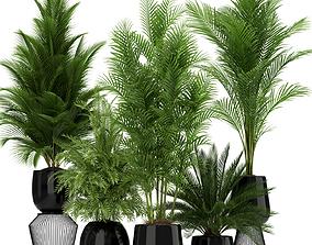 3D model Plants collection 184