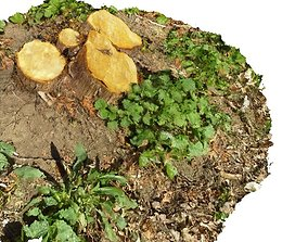 game-ready Forest small stump 3D scan