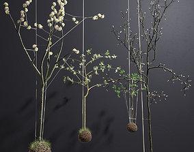 tree String Garden 3D