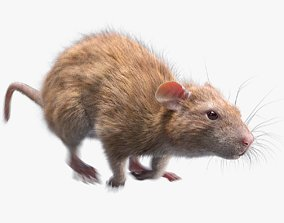Rat Fur Animated Brown 3D
