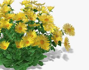 Flowers Doronicum 3D model